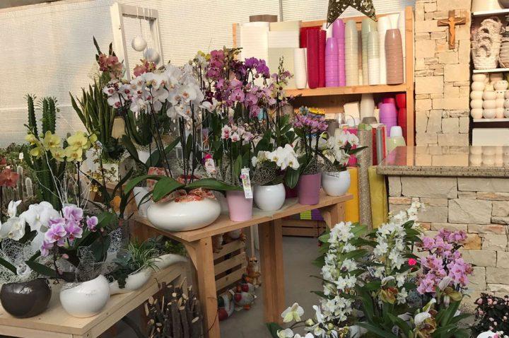 Fioraio a belluno limana trichiana - Cerco piante da giardino in regalo ...