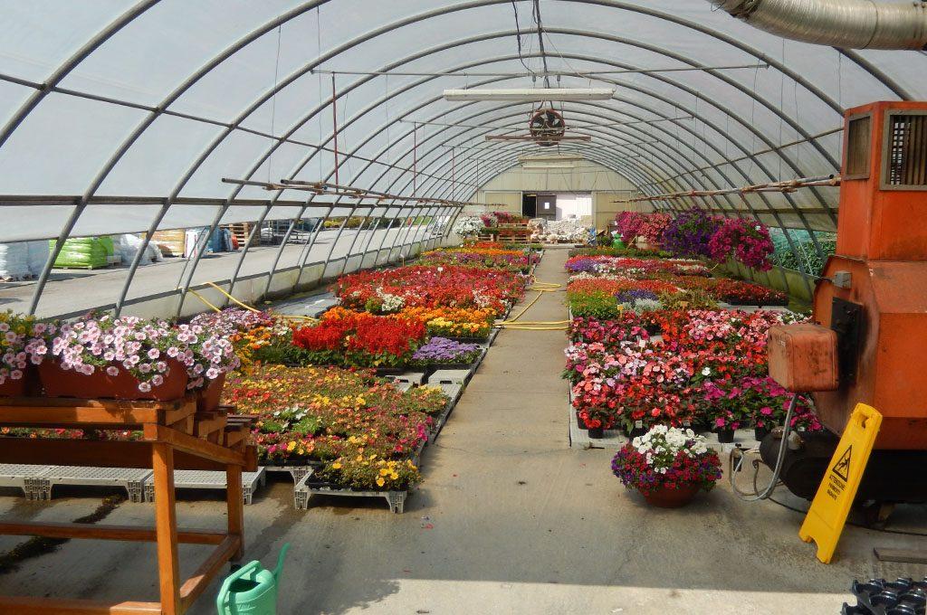 Vivaio e piante da giardino a belluno for Vendita piante giardino