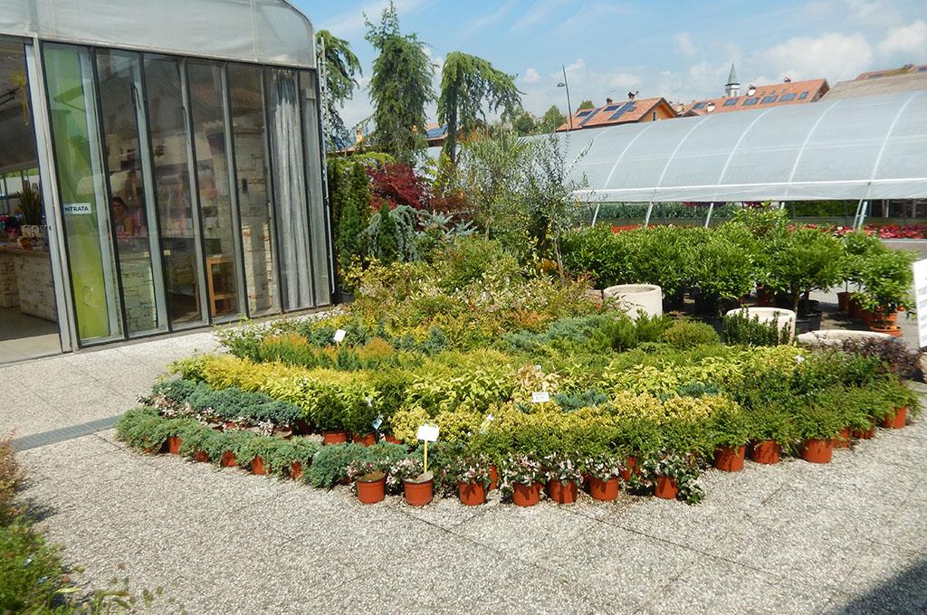 Vivaio e piante da giardino a belluno for Piante da vivaio